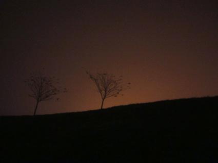 treefog-425.jpg