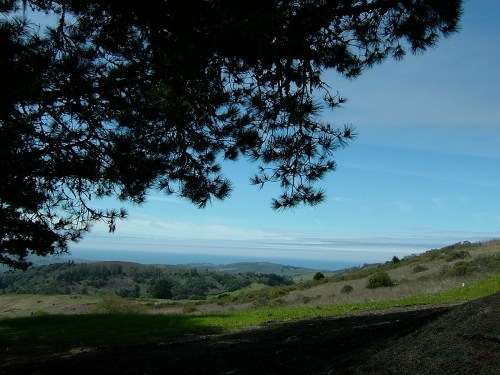 Djerassi view