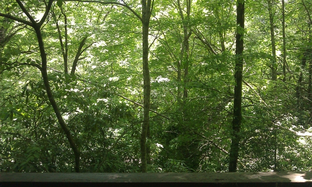 (This was the view from my writing desk. No wonder I wrote a forest into my novel.)