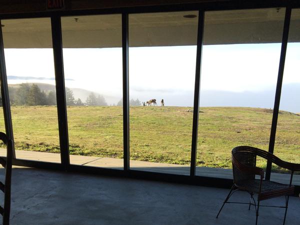 06 djerassi morning visitors