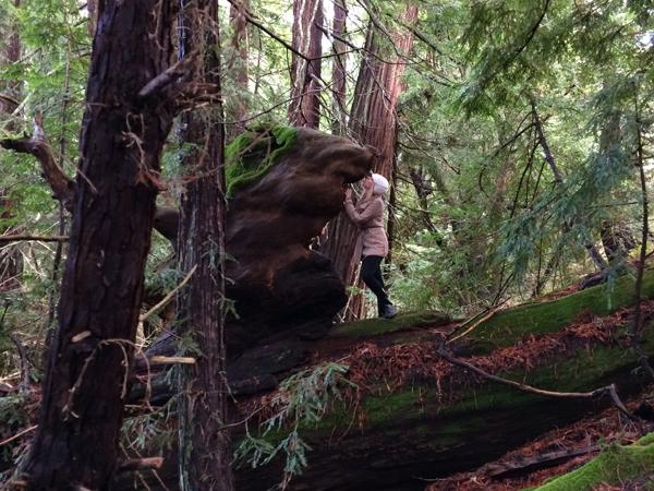 09 djerassi sculpture climb
