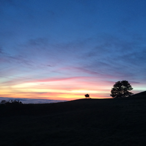 The Very First Djerassi YA Novel Workshop and Retreat