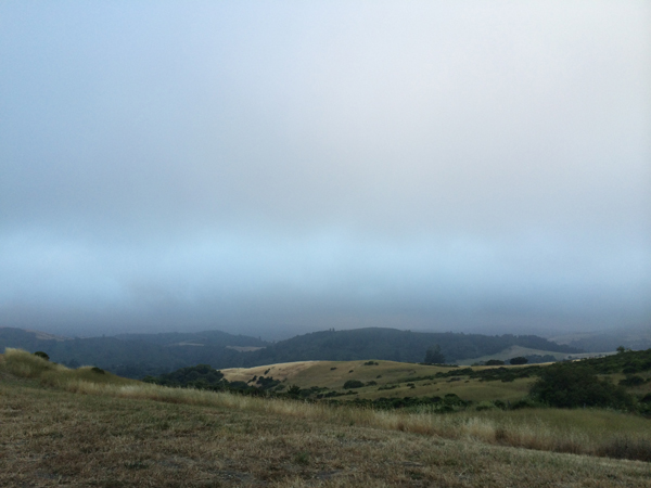 The view at Djerassi, with the fog rolling in. You can't see it, but the Pacific Ocean is out there.